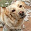 «Хозяин, очень стыдно!» 10 фото провинившихся собак, которых невозможно не простить