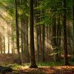 Запрет на посещение лесов снят по всей Беларуси