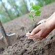Минчан приглашают к участию в акции «Зеленый двор вместе»