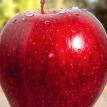 Cорт яблок супердолгого хранения вывели в США