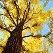 Девочка застряла на дереве в Костюковичах: ей понадобилась помощь спасателей