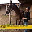 В агроусадьбе под Минском спасают от гибели старых лошадей и с их помощью лечат людей