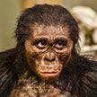 Предок человека оказался глупее современных обезьян