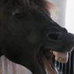 В Британии есть гостиница, где можно заночевать в стойле с лошадьми