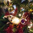 Кот запрыгнул на подвешенную к потолку елку и до слез рассмешил Сеть