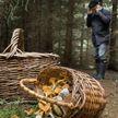 Грибник обнаружил останки человеческих скелетов в кобринском лесу