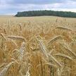 Суперкрупный холдинг предлагается создать для решения проблем в  АПК Витебской области