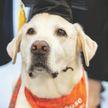 Собака получила докторскую степень американского университета