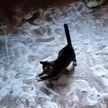 Коты рассыпали по полу сахар и играли с ним! Пользователей Сети удивила терпеливая хозяйка! (ВИДЕО)