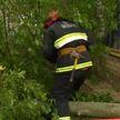 Дерево упало на веранду детского сада в Витебске: спасатели устранили угрозу