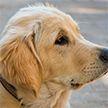 Собака утешила свою плачущую хозяйку – трогательное видео
