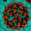 Бразильский штамм коронавируса может оказаться устойчивым к вакцинам