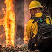 В Канадских лесах уже несколько дней бушует пожар