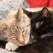 «Это слишком мило!» Объятия кота и кошки растрогали Сеть