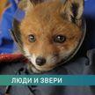 Как небезразличные люди спасают жизни животным. Репортаж из-под Минска