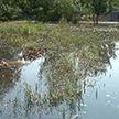 Ливень затопил агрогородок Ерёмино Гомельской области