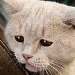 В Ганцевичском районе пьяный мужчина до смерти забил соседского кота