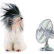 Названы пять простых способов охладить квартиру без кондиционера