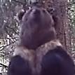Уральский медведь «станцевал» у дерева и попал на видео