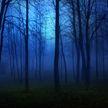 Труп мужчины обнаружили в лесополосе в Жодино