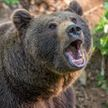 Медведь напал и убил туриста при восхождении на гору Арагац в Армении