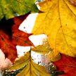 Желтый уровень опасности из-за ветра объявлен в Беларуси на 3 октября