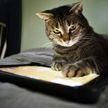 Чем занять кота? Нарисуйте жука! Только посмотрите, какой эффект! (ВИДЕО)