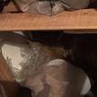 Женщина решила перебрать шкаф и увидела там шубу, которая привела её в ужас, – она оказалось живой
