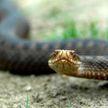 Змея взобралась на стену дома и позвонила в дверь (ВИДЕО)
