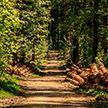 Запреты и ограничения на посещение лесов действуют в 53 районах Беларуси – Минлесхоз