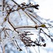 Фотофакт: последний морозный день в Минске