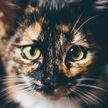 «Она случайно борщ не варит?»: кошка принесла еду больной хозяйке и стала звездой интернета