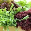 Топ-5 листовых салатов, которые полезнее всего есть на ужин