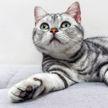Кошка принесла котят под одеяло хозяйке и восхитила всех (ВИДЕО)