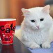 Девушка поделилась лайфхаком, который поможет приучить кошку пить воду:  пользователи Сети подтвердили