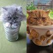 15 доказательств того, что коты – это жидкость. А седьмое фото рассмешит вас до слез!