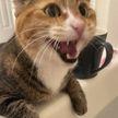 Наглость, не знающая границ: 7 фотографий котов, которые ни во что не ставят личное пространство хозяев