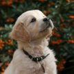 Сама вежливость: щенок постучал в дверь, чтобы хозяева впустили его в дом