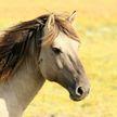 Лошадь защитила наездника от коровы и восхитила всех (ВИДЕО)