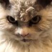 Очень злой кот: мужчина немного задержался на работе, его возвращению домой обрадовались не все