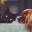 Кот считает себя хозяином в доме – забрал лежанку собаки, ей пришлось ютиться на маленькой постели пушистого. Посмотрите, видео заставит вас хохотать до слез!