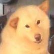 Реакция собаки, которая увидела хозяина после года разлуки (ВИДЕО)