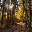 Запрет на посещение лесов введён во всех районах Беларуси