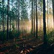 12-летний мальчик пропал в лесу под Кличевом