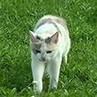 Больные бешенством животные нападают на людей в  Гродненской области