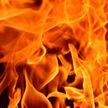 На пожаре в Осиповичском районе погибли 19 телят