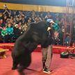 Медведь набросился на дрессировщика во время циркового представления в Карелии
