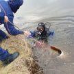 В Пуховичском районе водолазы достали из реки мёртвого мужчину (ВИДЕО)