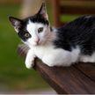 Кот станцевал на столе и сразил всех наповал! Посмотрите, как эмоционально и с огоньком! (ВИДЕО)