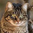 Ученые уличили бродячих котов в склонности к людоедству